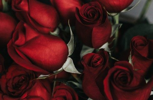 Bouquet of dark red roses with green stems